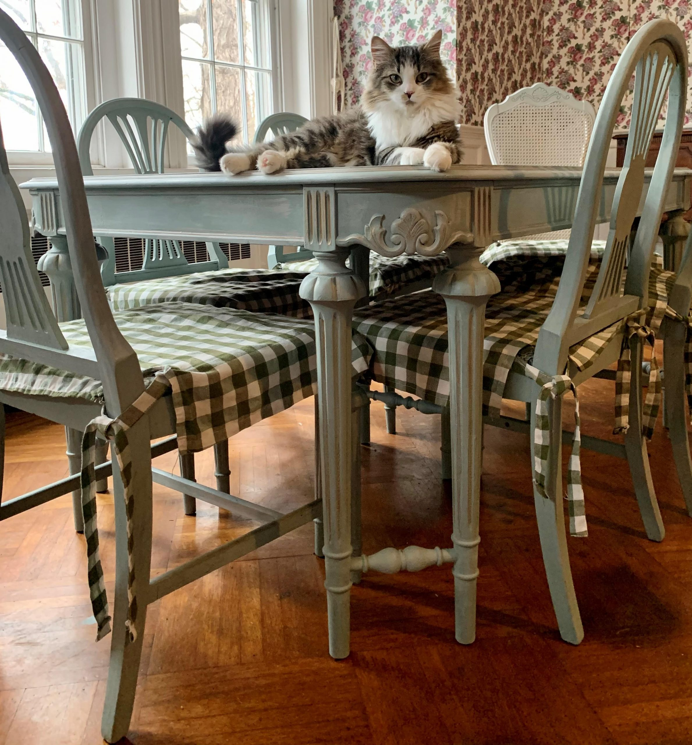 grey and white kitten sitting on blue green neoclassical table